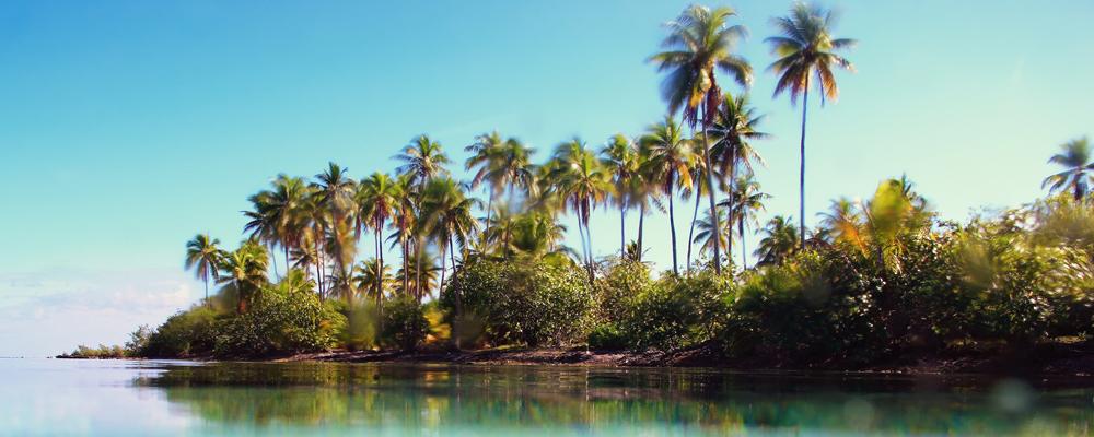 Comme le palmier